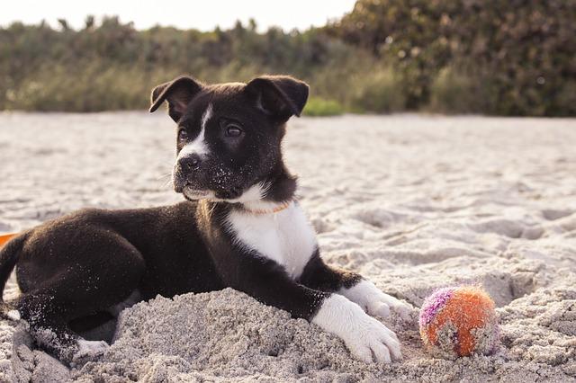חיה כלכך חמודה - כלב